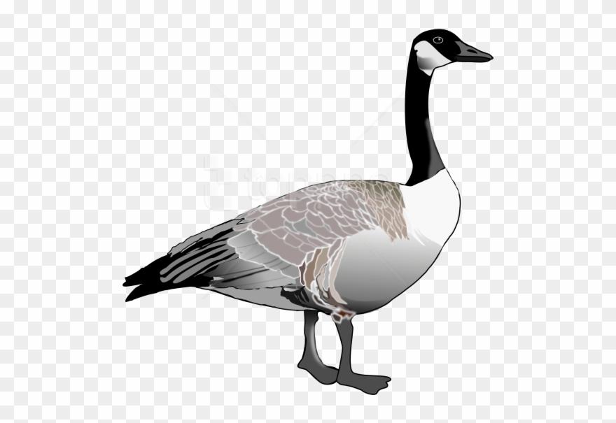 goose # 5063816