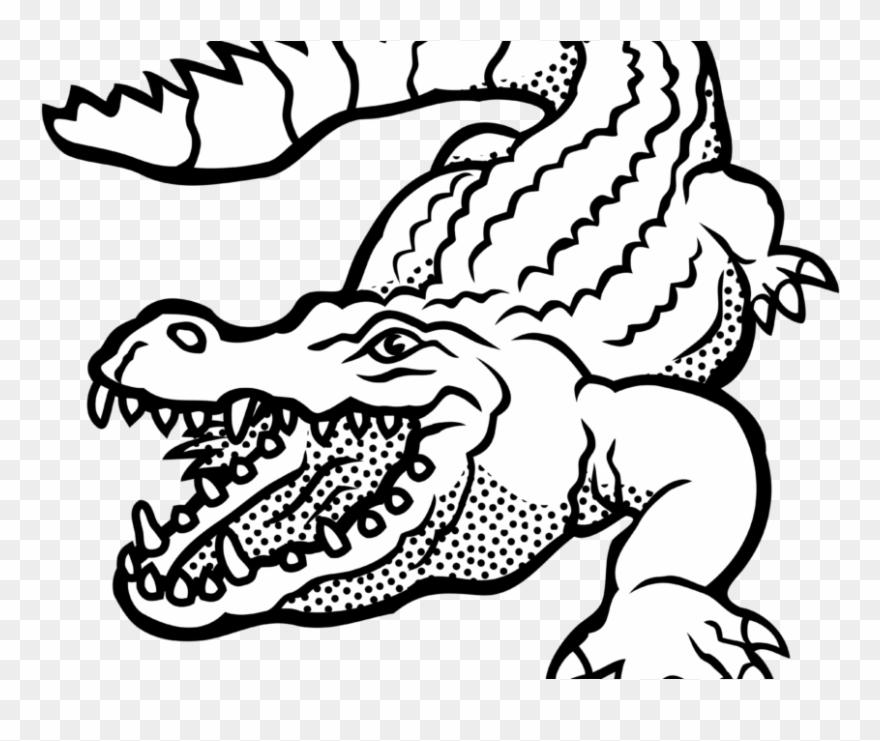 alligator # 5015516