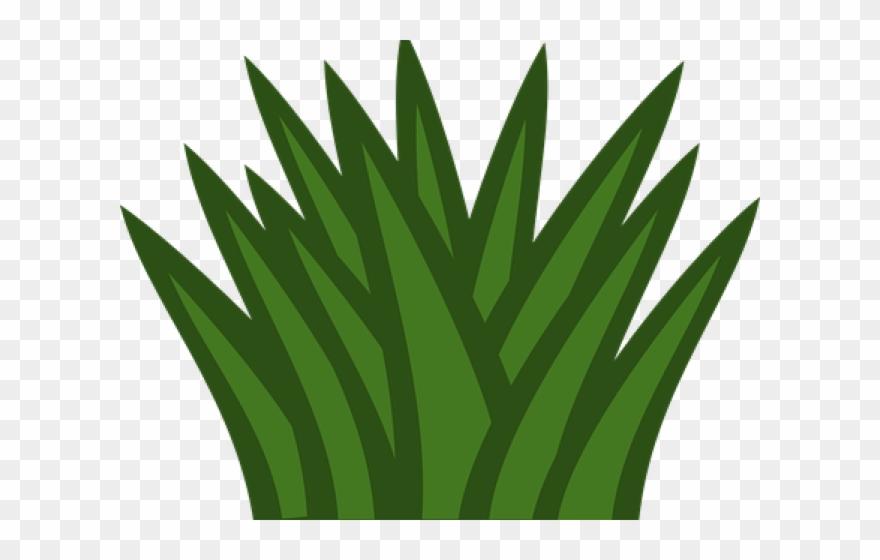 shrub # 5054785