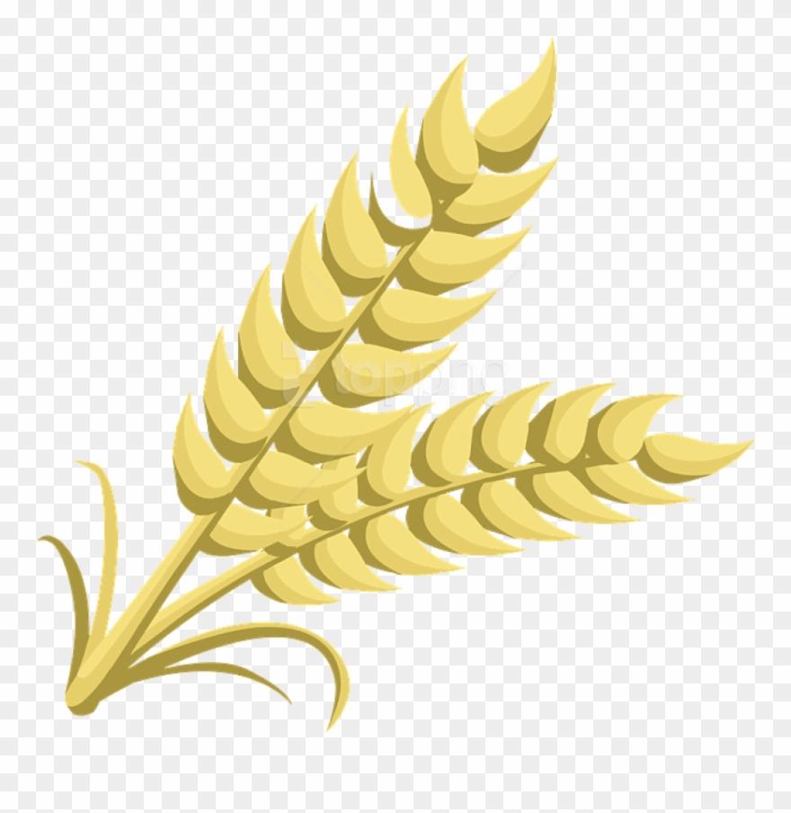 grain # 5098266