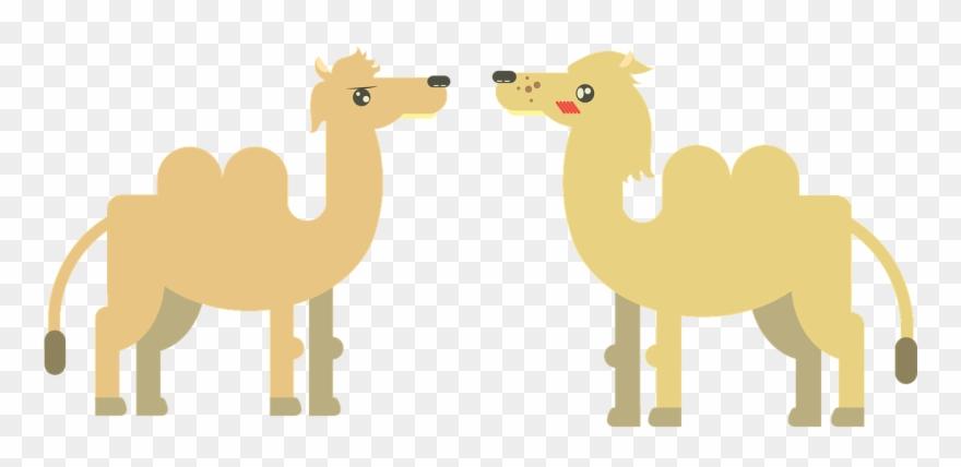 camel # 5099283