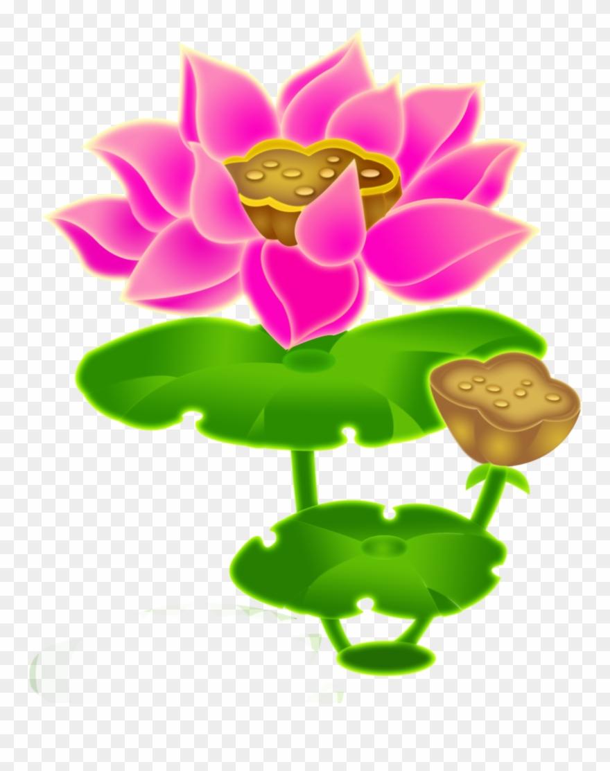 lotus # 5073127