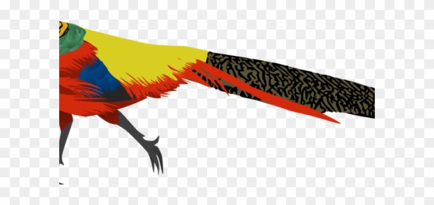 pheasant # 5076266