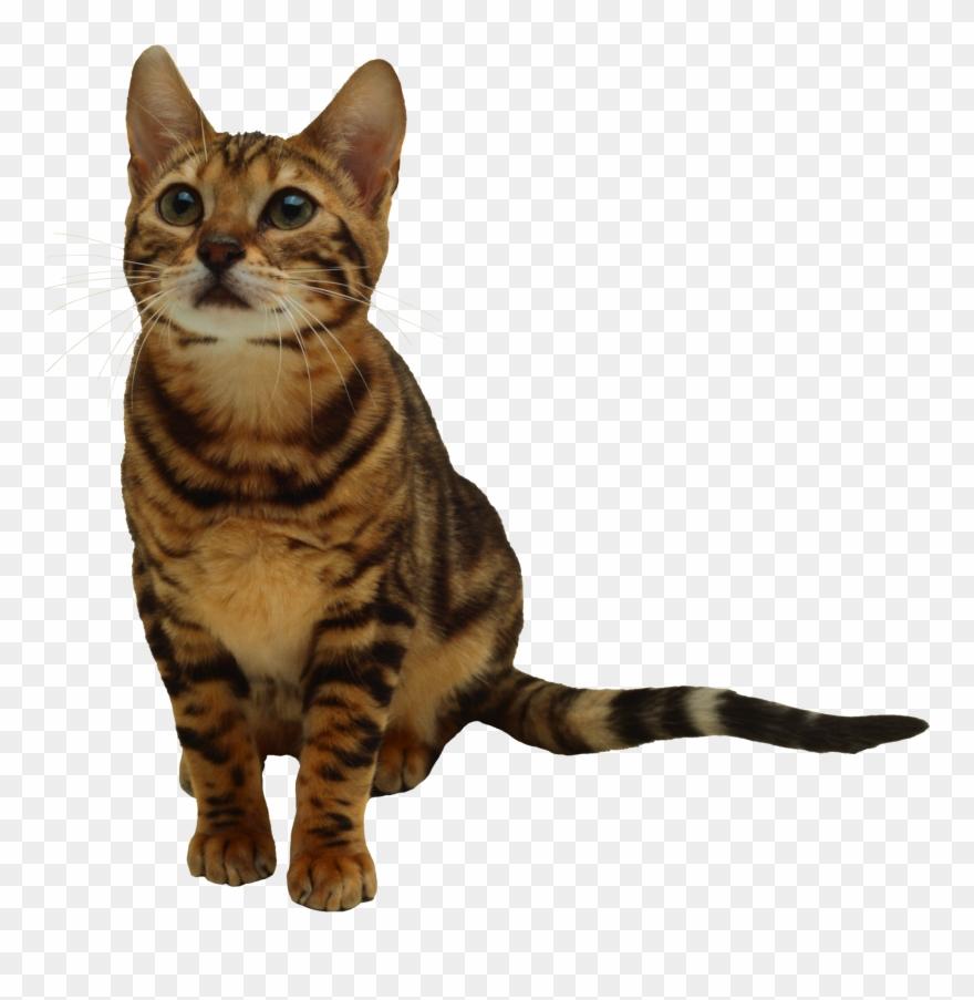 tabby-cat # 5056339