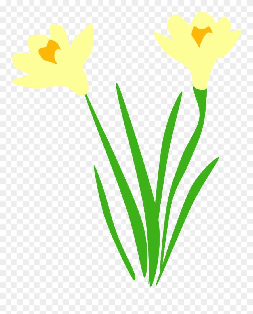 flowering-plant # 5156967
