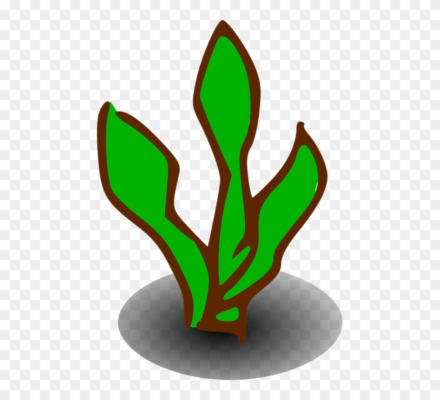 shrub # 5157434