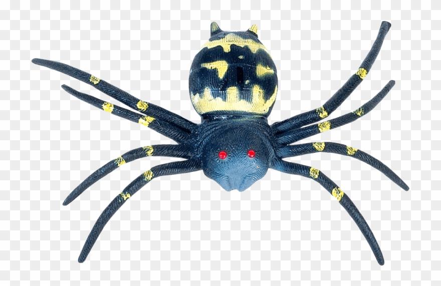spider # 5220526