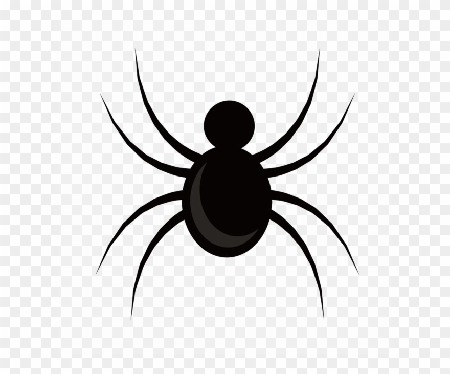 spider # 5220527