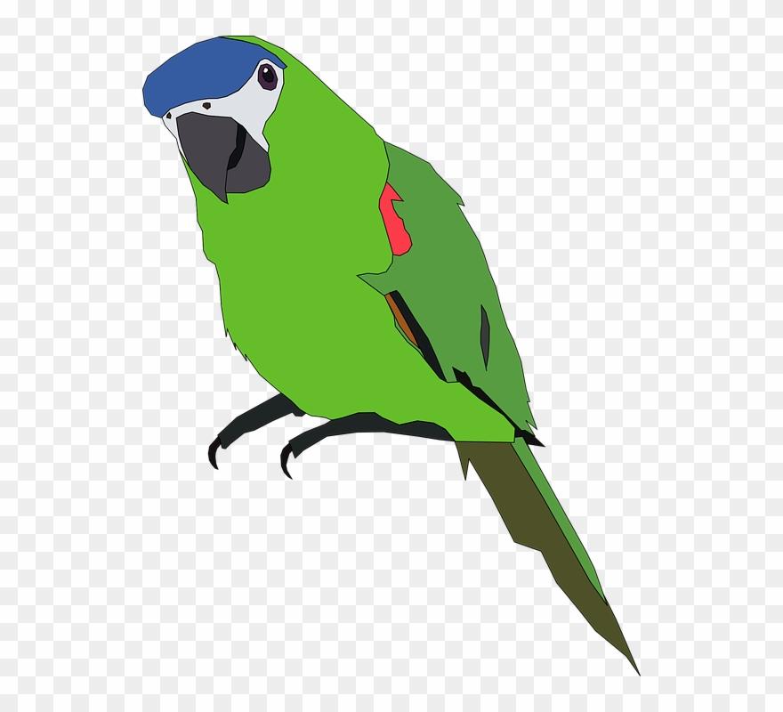 lovebird # 5238391