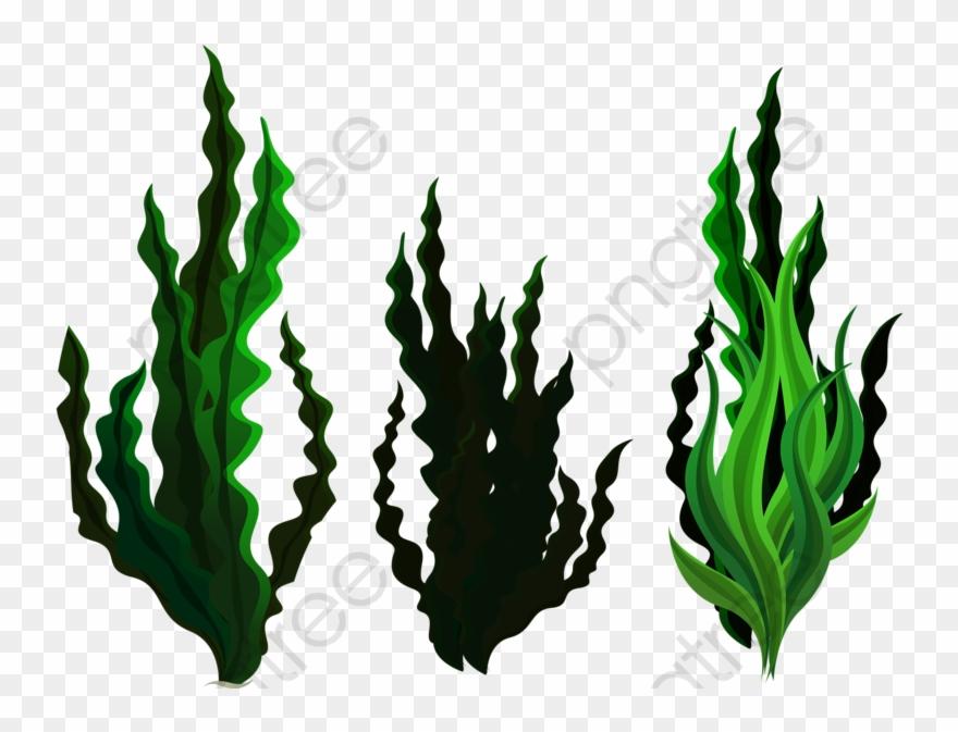 seaweed # 5209247