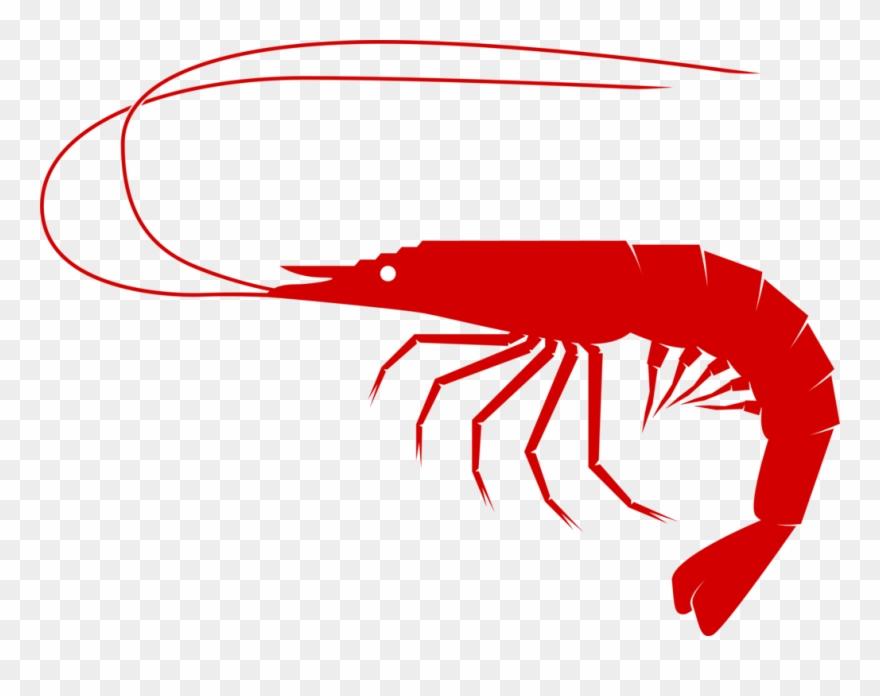 shrimp # 5021601