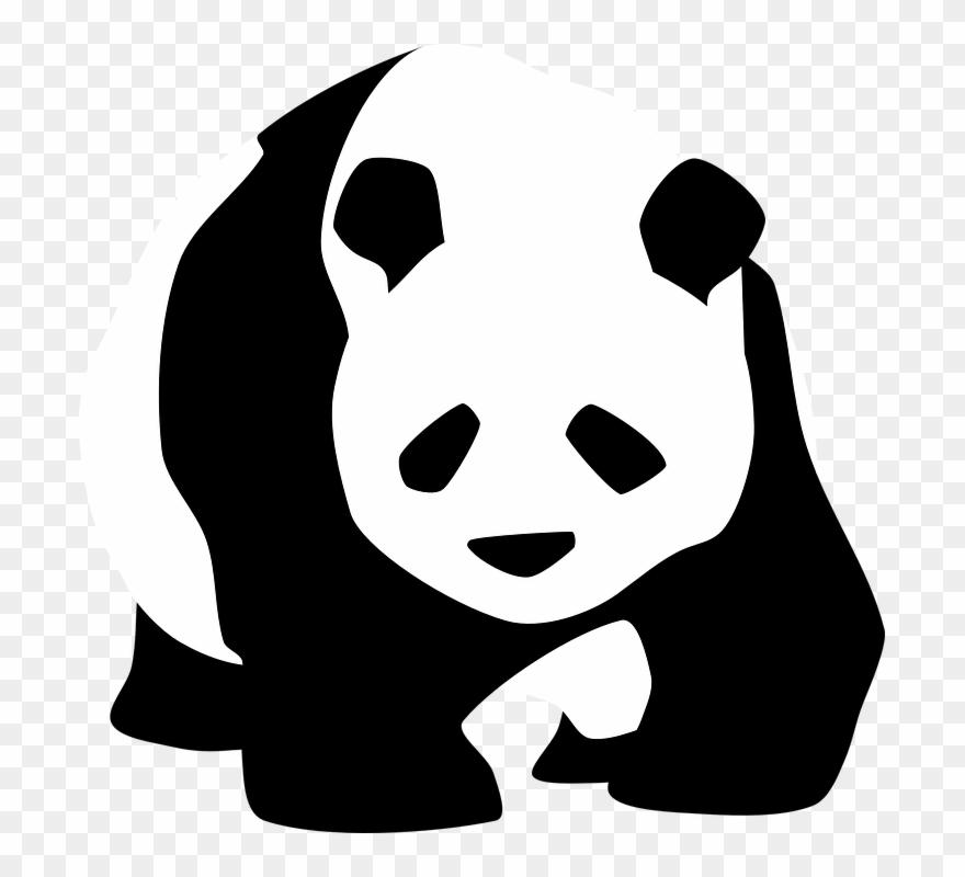 red-panda # 5237424