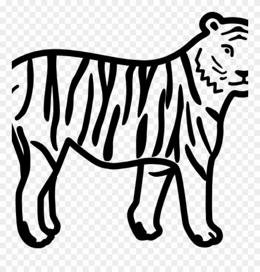 tiger # 4856624