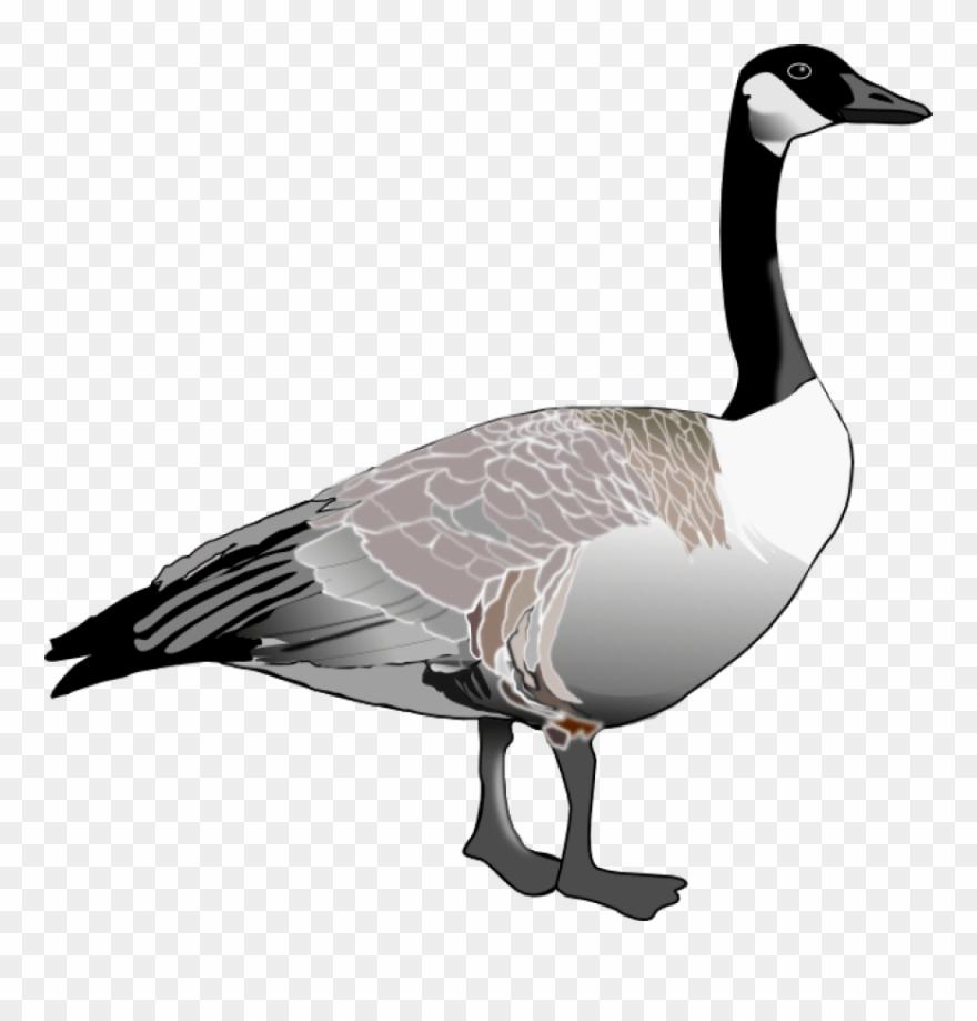 goose # 4853415