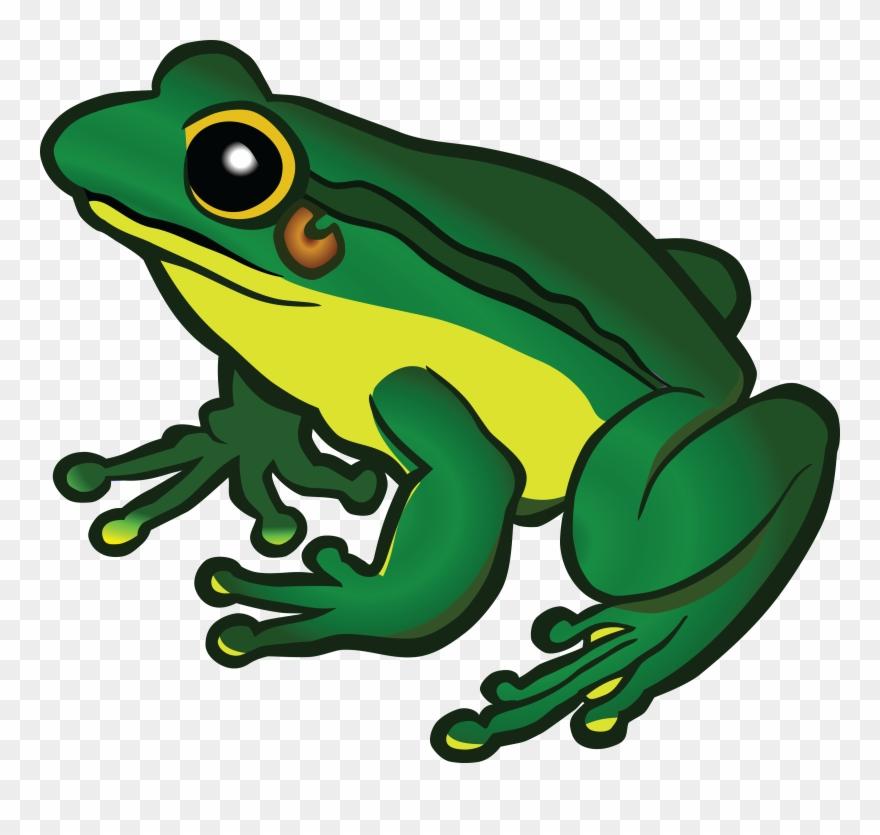 frog # 4846672