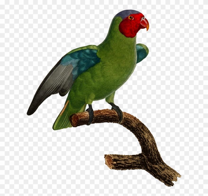 lovebird # 5030949