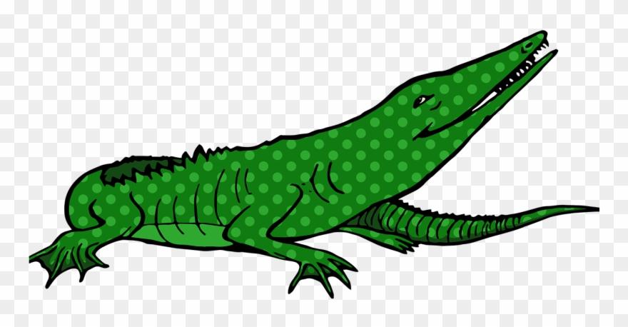 alligator # 5013580