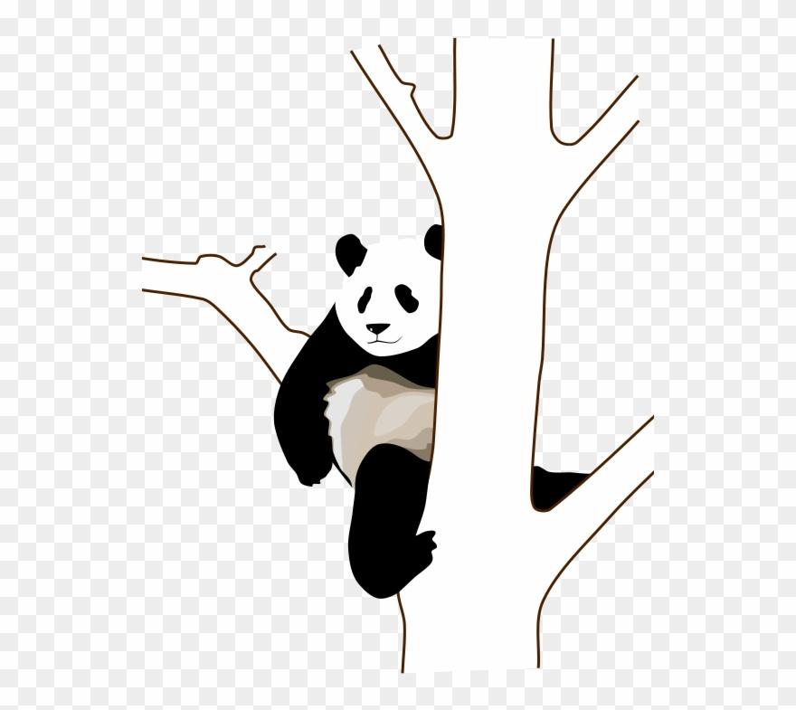 red-panda # 5013726