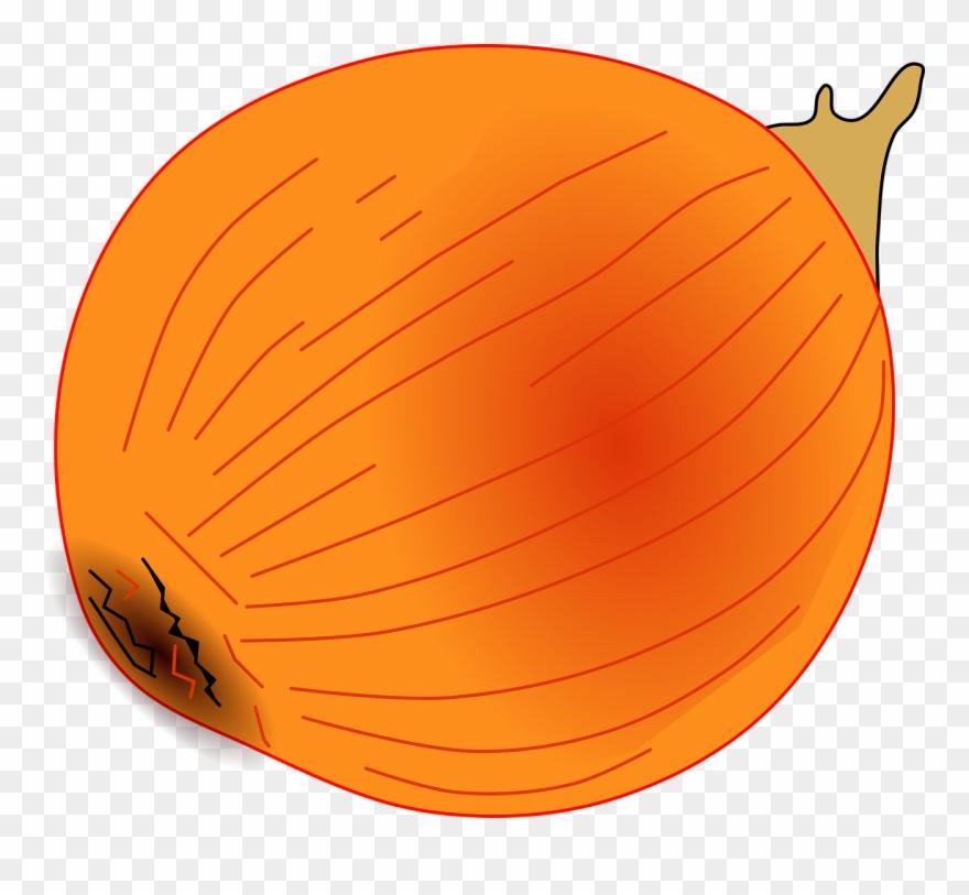onion # 5011504