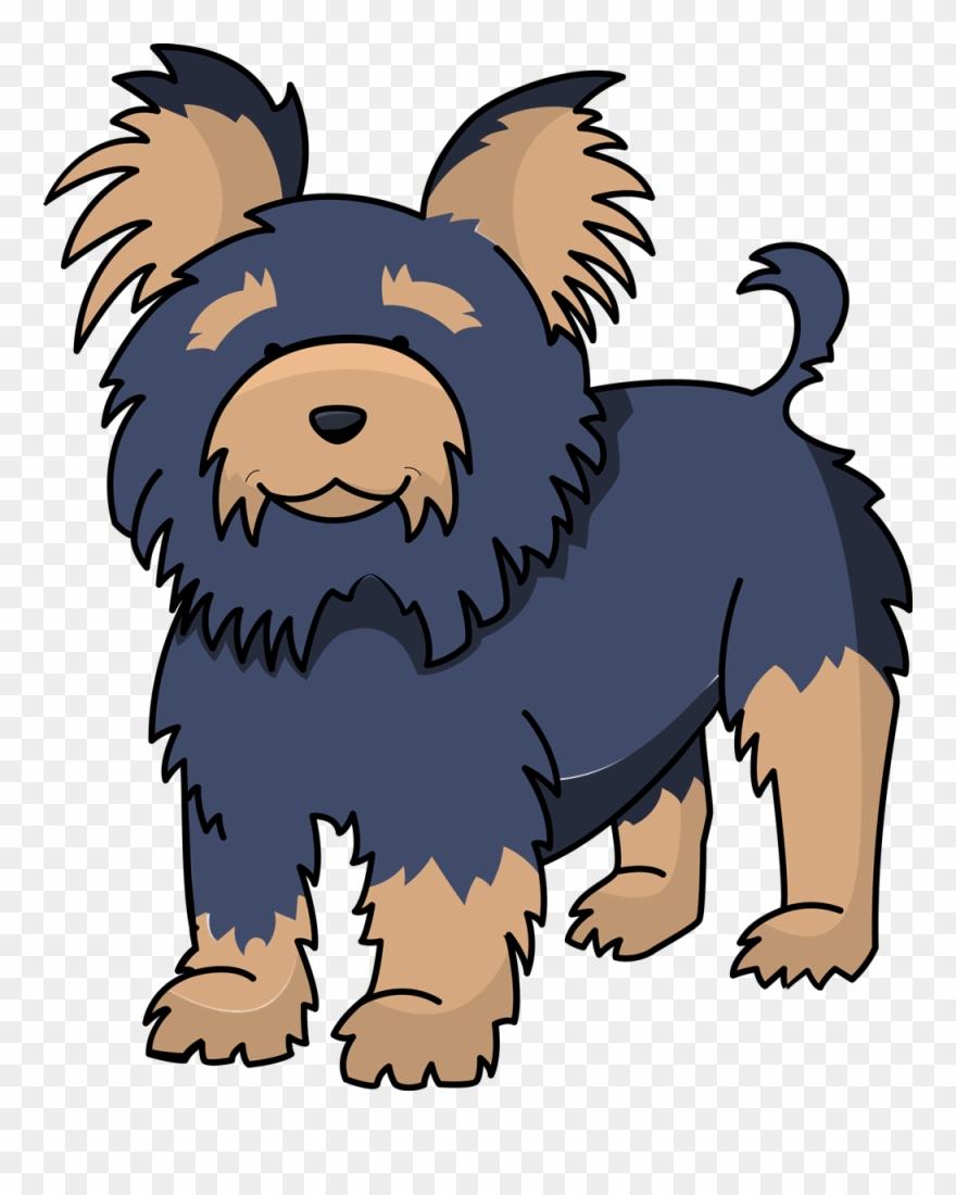 yorkshire-terrier # 5008772