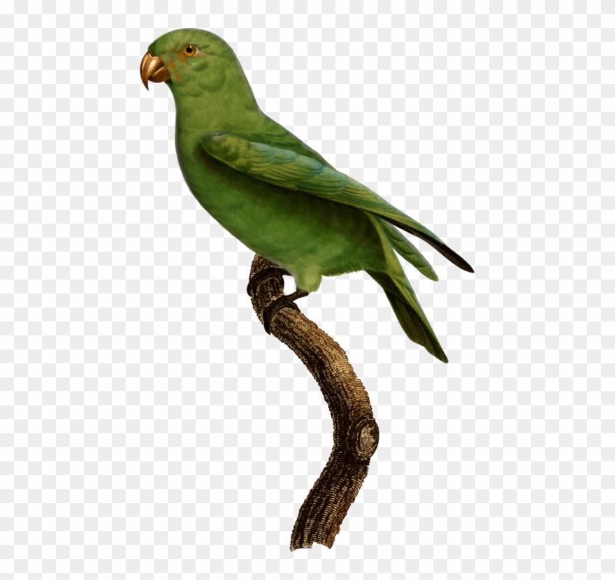 lovebird # 5006536