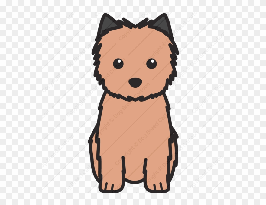 yorkshire-terrier # 5010305