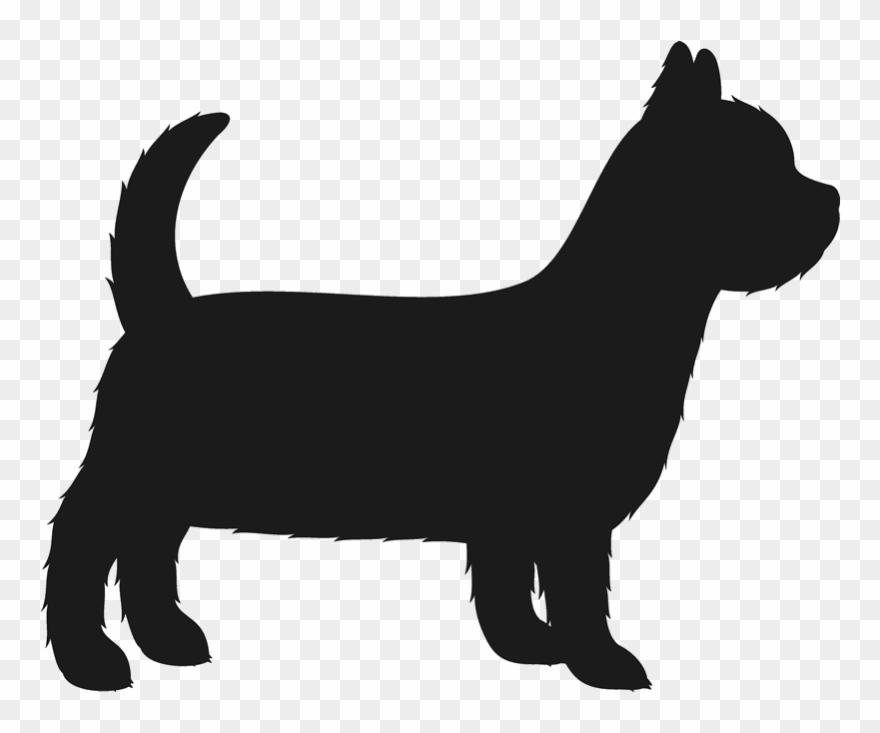 yorkshire-terrier # 5006811