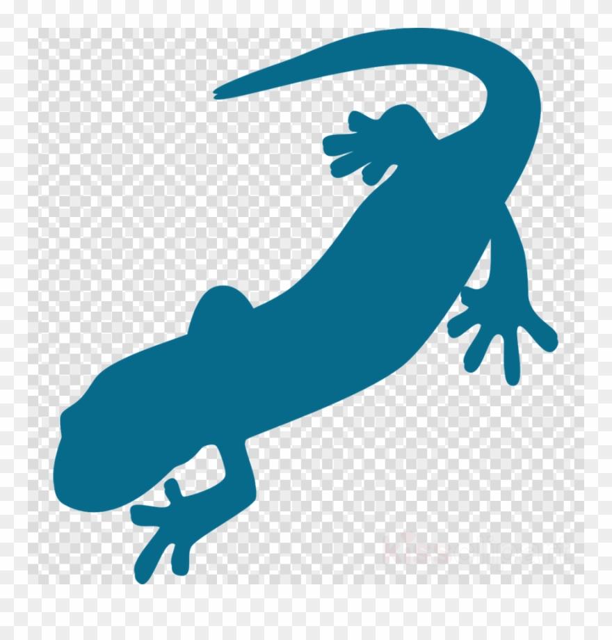 salamander # 5006955