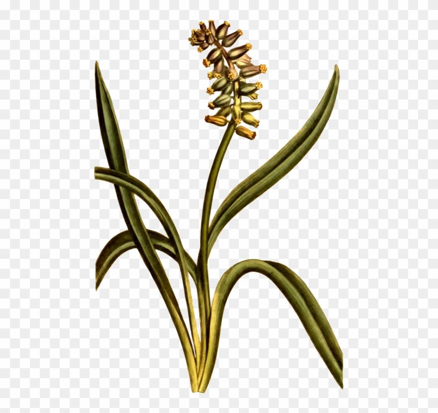 plant-stem # 5039184