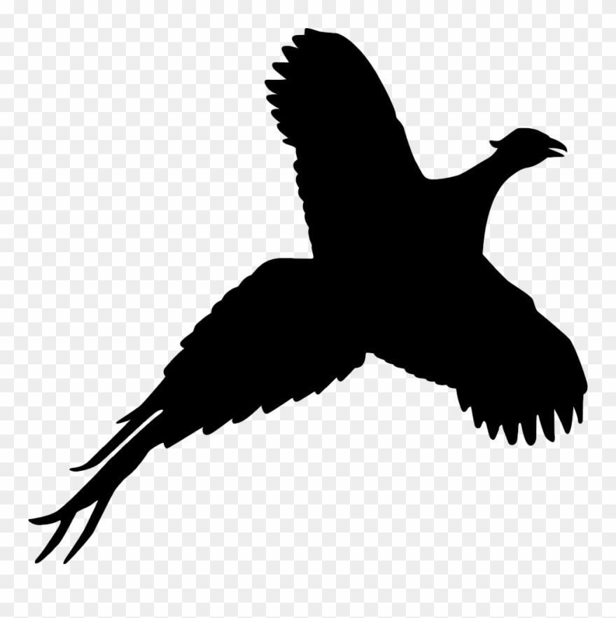 pheasant # 5037343