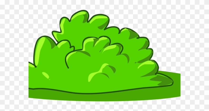 shrub # 5036902