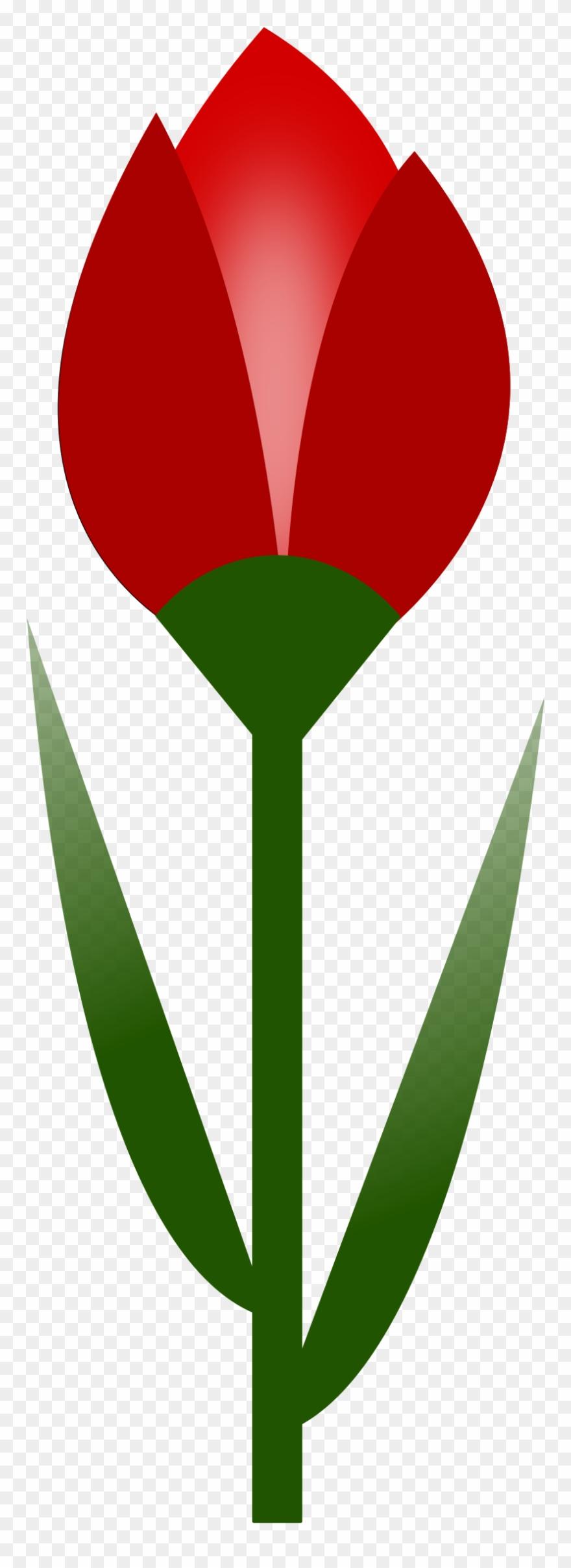 tulip # 5039731