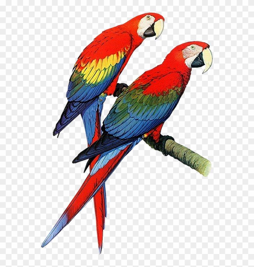 parrot # 4866386