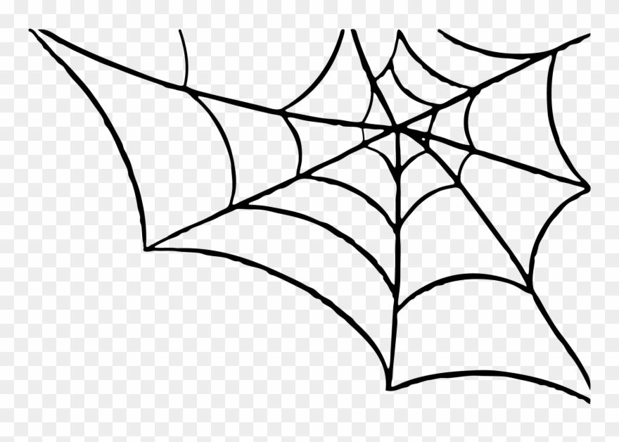 spider # 4839739
