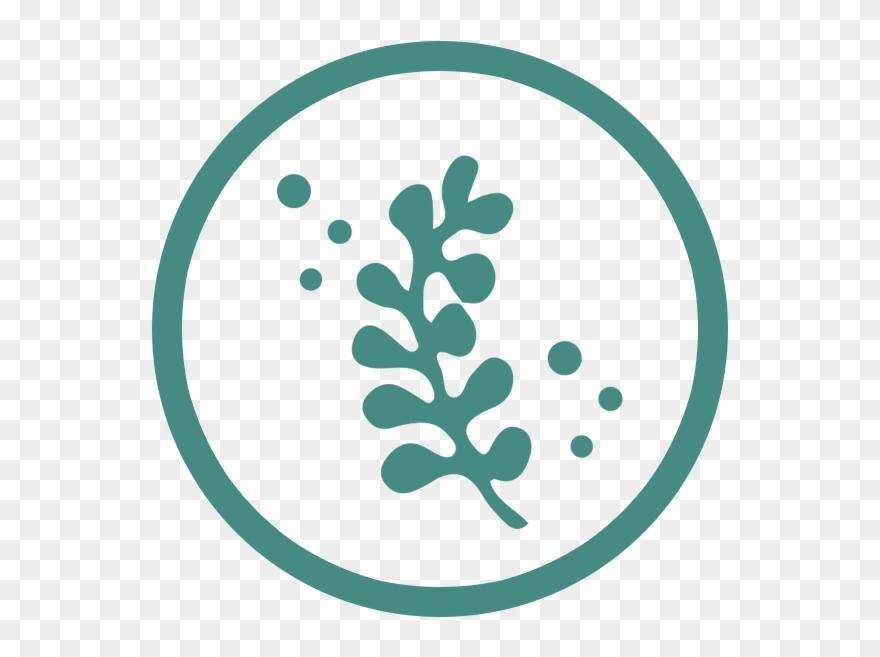 seaweed # 5004203