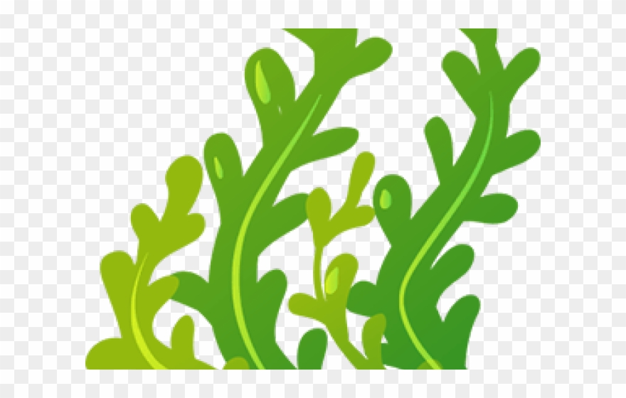 seaweed # 5004182