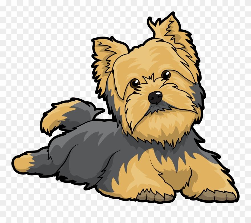 yorkshire-terrier # 5026751