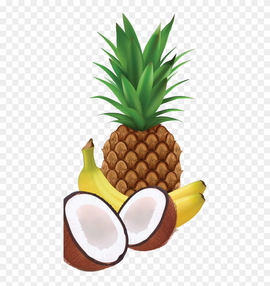 coconut # 5026968