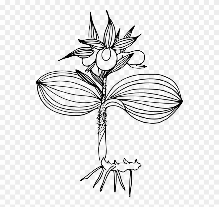 flowering-plant # 5028237