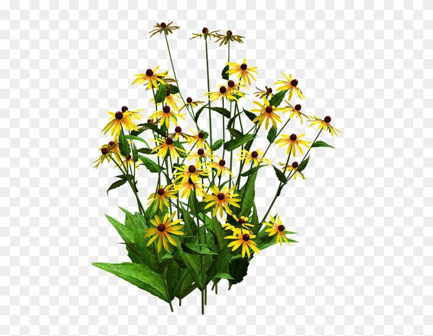 shrub # 5016915