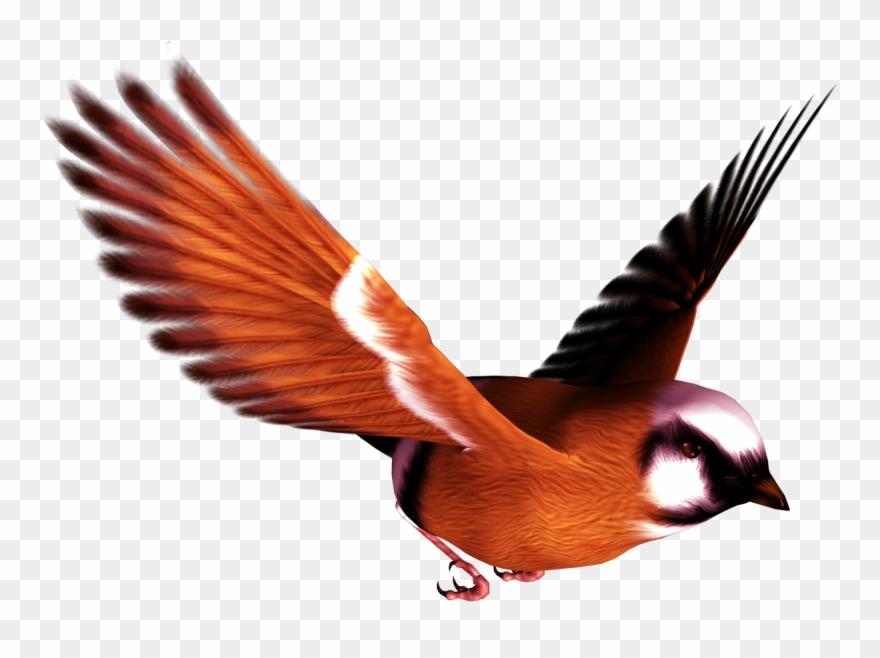 songbird # 4984564