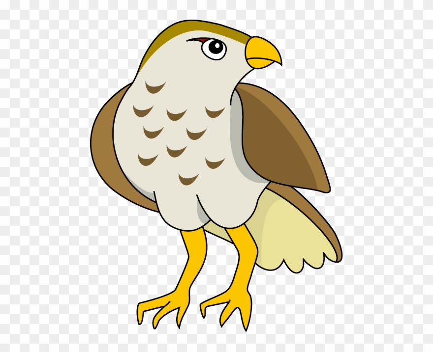 hawk # 4982466