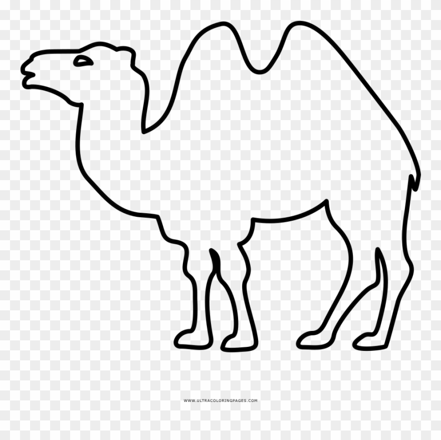 camel # 5020212