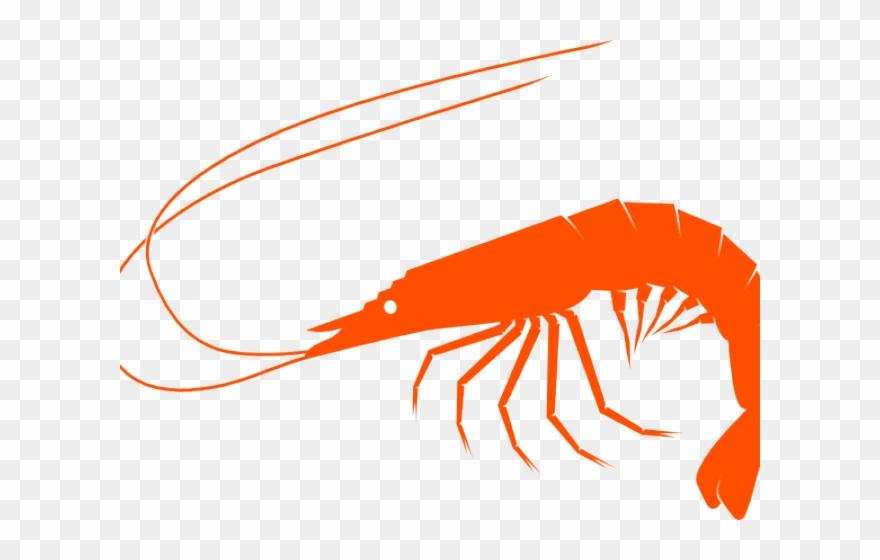 shrimp # 5020454