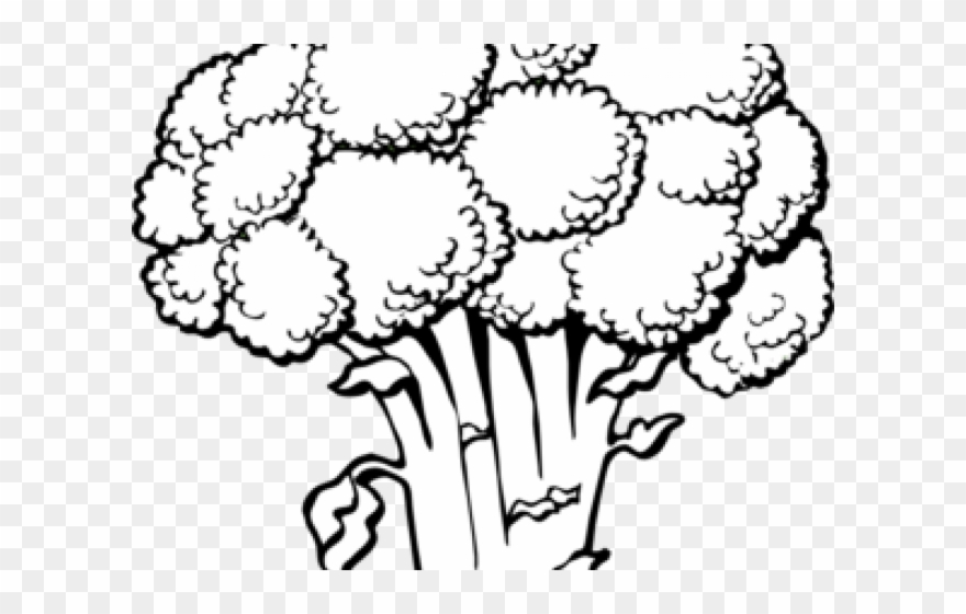 broccoli # 5041592