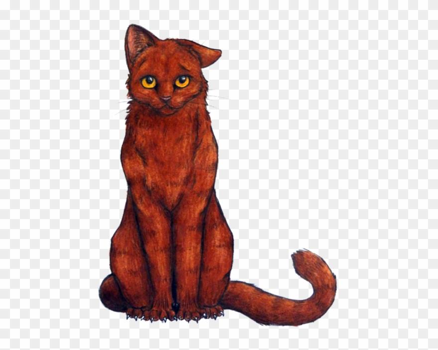 tabby-cat # 5043258
