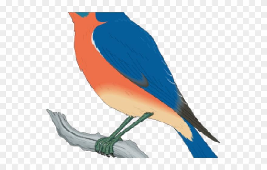 eastern-bluebird # 5023115