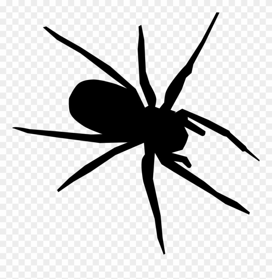 spider # 4847907