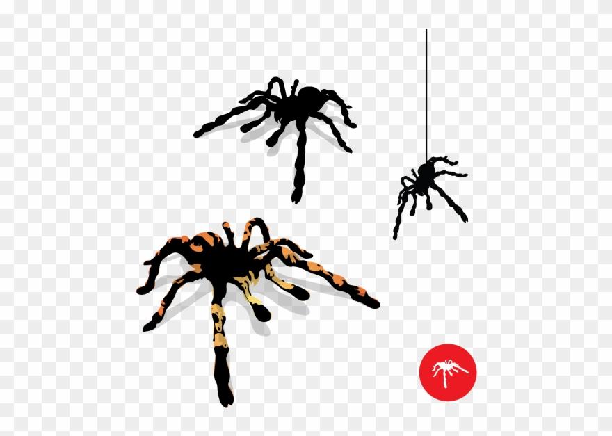 spider # 4846786