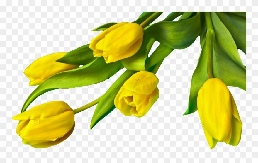 yellow # 4848419